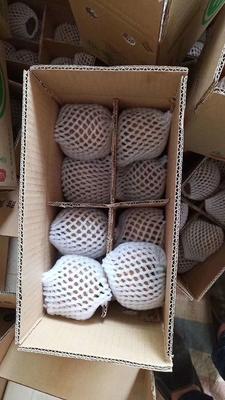 这是一张关于周至猕猴桃 100~120克的产品图片