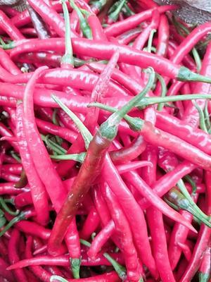 这是一张关于二荆条辣椒 10~15cm 红色 微辣的产品图片