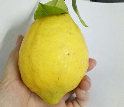 广西壮族自治区玉林市容县黄柠檬 3.3 - 4.5两