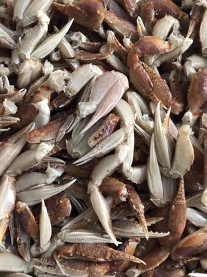 这是一张关于蟹钳的产品图片