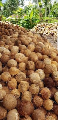 天津滨海新区毛椰 1.5 - 2斤
