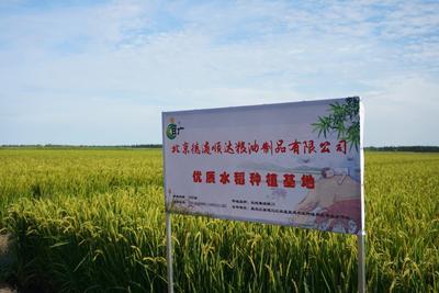 北京顺义区长粒香大米 非有机大米 晚稻 一等品