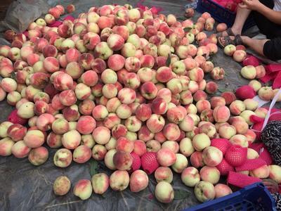 河北省唐山市丰润区大红桃 70mm以上 4两以上