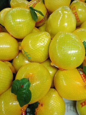 广东省广州市番禺区梅州蜜柚 2.5斤以上