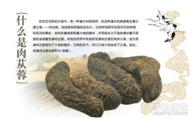 青海省西宁市城东区肉苁蓉