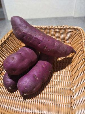 福建省泉州市安溪县日本紫薯王 2两以下