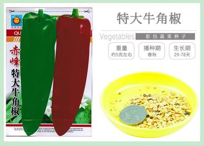 江苏省宿迁市沭阳县牛角椒种子 90%以上 常规种