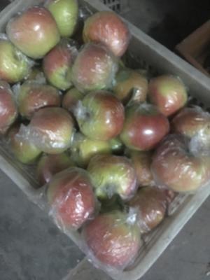这是一张关于美八苹果 膜袋 片红 75mm以上 的产品图片