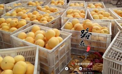 这是一张关于锦香黄桃 70mm以上 3 - 4两的产品图片