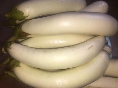 广西壮族自治区柳州市柳南区白茄子 4两以上