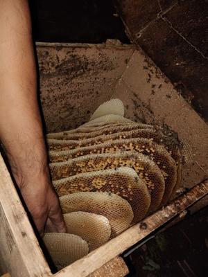 陕西省宝鸡市渭滨区土蜂蜜 玻璃瓶装 100% 2年以上