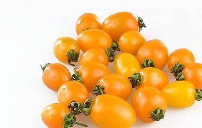 这是一张关于黄圣女果的产品图片