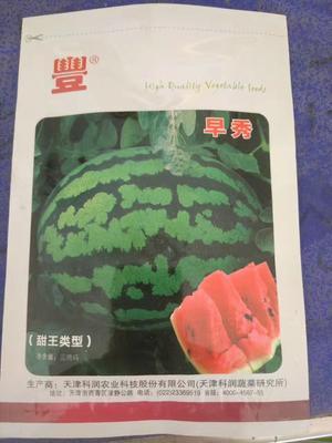 山东省潍坊市青州市甜王西瓜种子