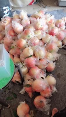 云南省红河哈尼族彝族自治州蒙自市蒙自石榴 0.3 - 0.5斤