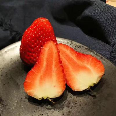 甜查理草莓苗 地栽苗 10~20公分