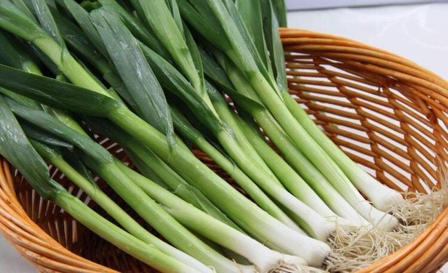 白根蒜苗 60 - 70cm图片