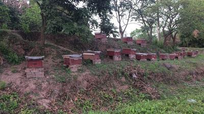 四川省泸州市江阳区中华蜜蜂