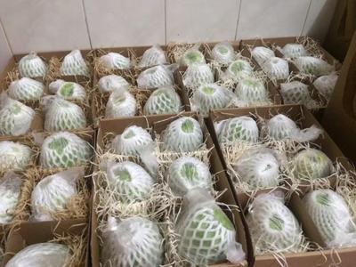 福建省漳州市南靖县红心芭乐 200-250克