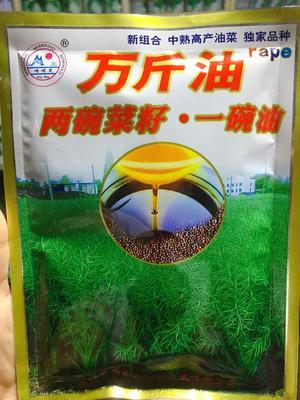 四川省成都市金牛区油菜籽种子