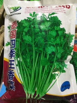 四川省成都市金牛区香菜种子