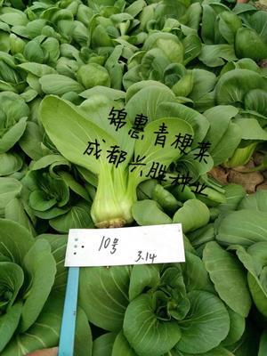 四川省成都市新都区油菜籽种子 杂交种 ≥99% ≥99% ≥99% ≤7%