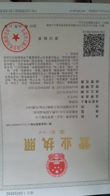 山东省聊城市莘县革命胡子鲢 人工养殖 0.25-1公斤
