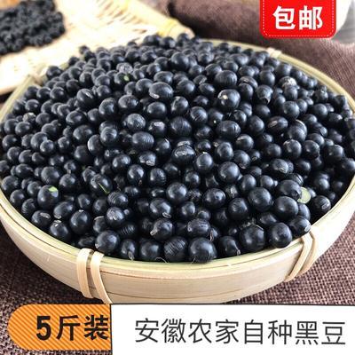 安徽省宿州市泗县乌皮青仁豆