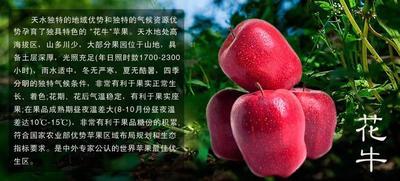 甘肃省天水市清水县红蛇果 300-400克