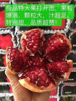 四川省凉山彝族自治州会理县哥斯达番石榴 250-300克