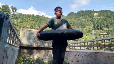 贵州省黔东南苗族侗族自治州台江县黑皮冬瓜 25斤以上 黑皮