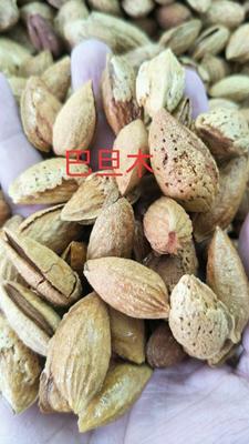新疆维吾尔自治区乌鲁木齐市乌鲁木齐县巴旦木 1年以上 带壳