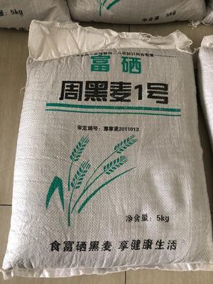 江苏省苏州市吴中区黑麦