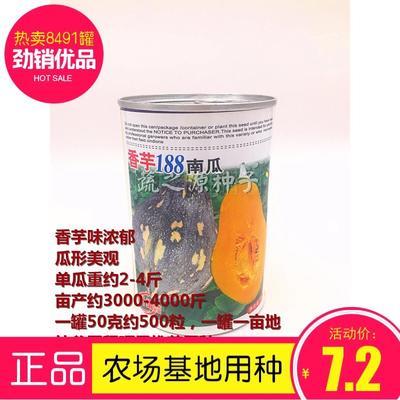 广东省清远市英德市香芋南瓜种子 种子