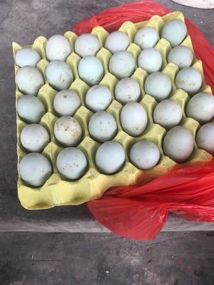 贵州省黔东南苗族侗族自治州凯里市金定鸭蛋 食用 箱装