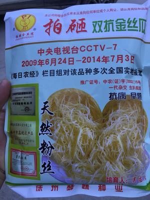 安徽省宿州市泗县金丝搅瓜种子 种子