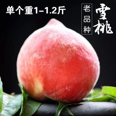 云南省丽江市玉龙纳西族自治县雪桃 95mm以上 5两以上