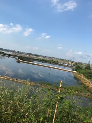 安徽省宣城市宣州区固城湖大闸蟹 3.0-3.5两 统货