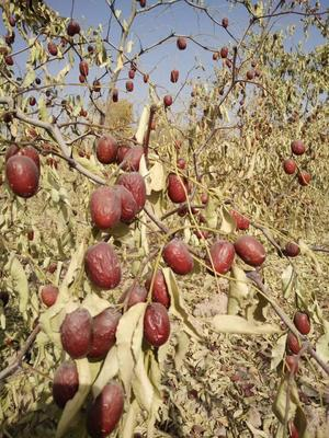 新疆维吾尔自治区阿克苏地区阿克苏市新疆红枣 一级