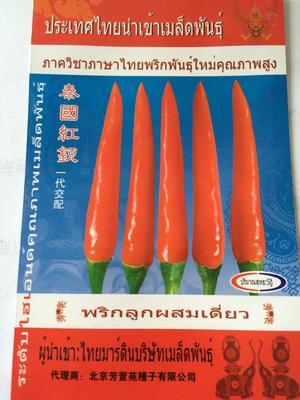 这是一张关于朝天椒种子 95%以上 杂交种的产品图片