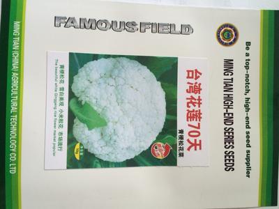 这是一张关于松花菜种子 一级良种的产品图片