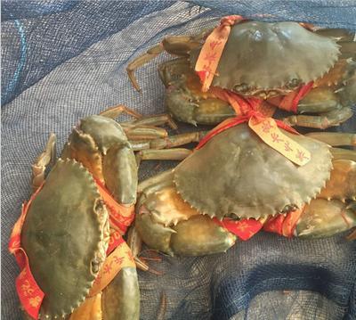 这是一张关于青蟹 2.0-2.5两 母蟹的产品图片