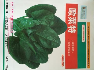 这是一张关于黑圆大叶菠菜种子的产品图片