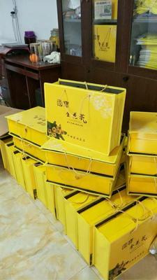 广西壮族自治区崇左市江州区金花茶 15~20cm