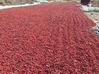 这是一张关于红太阳干辣椒的产品图片