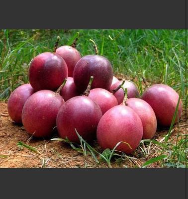这是一张关于紫红色百香果 50 - 60克的产品图片