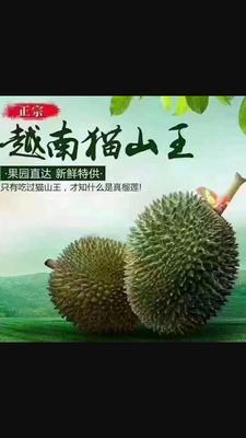 广西壮族自治区崇左市凭祥市猫山王榴莲 60 - 70%以上 2公斤以下