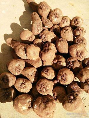 这是一张关于魔芋种子的产品图片