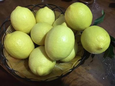 云南省红河哈尼族彝族自治州个旧市尤力克柠檬 2 - 2.6两