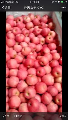 这是一张关于红富士苹果 纸袋 表光 75mm以下的产品图片