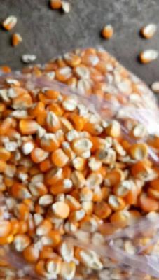 这是一张关于玉米干粮 霉变≤1% 杂质很少的产品图片